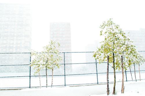 Vanderbilt Snow