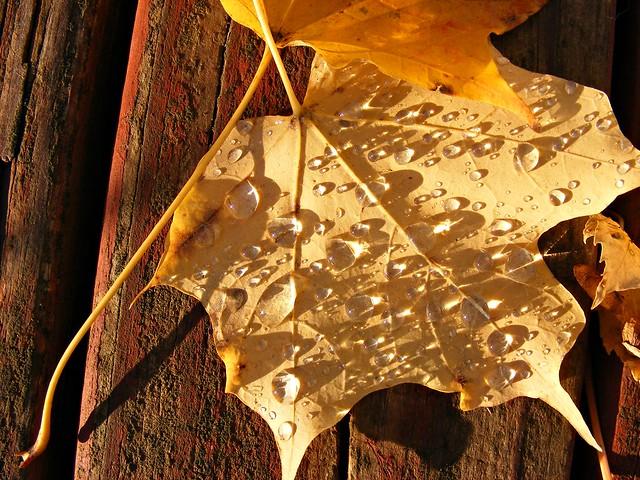 Fall rains bring diamonds on leaves