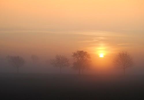 I woke up this morning...... by Tobi_2008