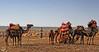 Caravana de camellos (Urugallu) Tags: africa costa canon 350d flickr morroco marocco animales marruecos atlantico caravana rezo mamiferos camellos assilah oceanoatlantico urugallu mygearandme ringexcellence