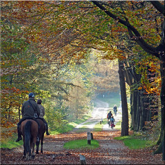 Wednesday afternoon(2th of november) in the woods near Amerongen (Cajaflez) Tags: wood autumn horses cyclists herfst thenetherlands cyclepath bos paarden fietspad fietsers amerongen thegalaxy provincieutrecht topshots 100commentgroup panoramafotogrfico saariysqualitypictures doubleniceshot tripleniceshot mygearandme mygearandmepremium mygearandmebronze mygearandmesilver mygearandmegold mygearandmeplatinum mygearandmediamond artistoftheyearlevel2 aboveandbeyondlevel1 flickrstruereflection1 flickrstruereflection2 flickrstruereflection3 flickrstruereflection4 flickrstruereflection5 flickrstruereflection6 flickrstruereflection7 aboveandbeyondlevel2 aboveandbeyondlevel3 rememberthatmomentlevel1 rememberthatmomentlevel2 rememberthatmomentlevel3