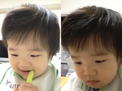 朝起きたらナイスな髪型になってたとらちゃん(2011/11/10)