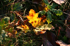 Herbst, autumn (Eifeelgood) Tags: autumn fall bestof magic herbst favorites selection best eifel myfavorites indiansummer eifeelgood magiceifel