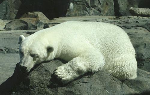 Alaska Zoo Ahpun.jpg