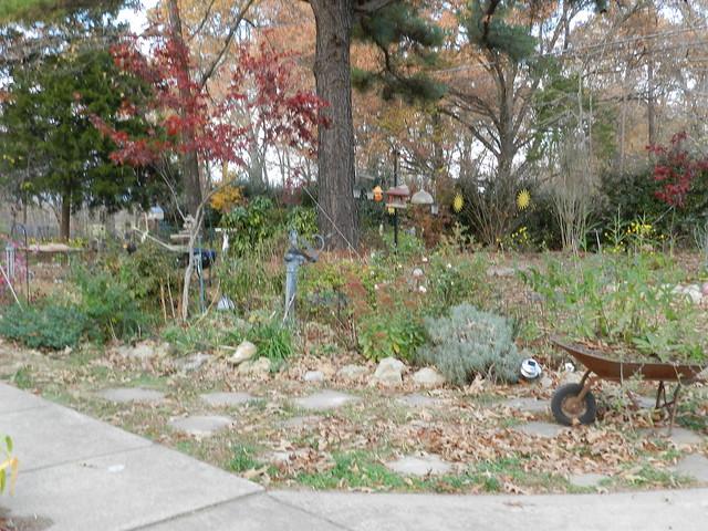 November Garden 151