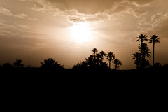 Desert Sunset Silhouettes (clee130) Tags: travel trees sunset orang