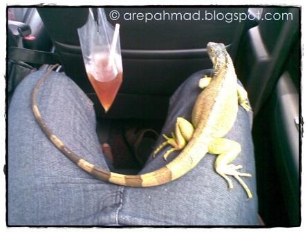 Nicky si Iguana