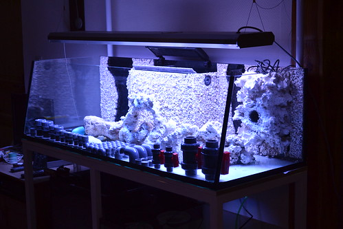 Luc's shallowreef tank 6354787177_91141341ed