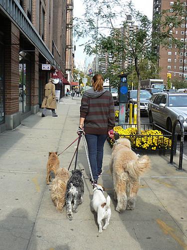 promeneuse de chiens.jpg