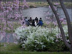 Le Djeuner sur l'Herbe (Christian Lagat) Tags: japan river spring kyoto picnic rivire cherryblossom  sakura kamo printemps japon banks kamogawa berges   piquenique   ledjeunersurlherbe nikkor1855mmf3556 nikond90 cerisiersenfleurs rivireauxcanards