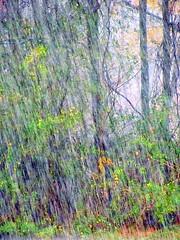 Heavy (Universal Pops (David)) Tags: bridge trees distortion texture rain weather virginia woods heavy mothernature stauntonriver roanokeriver boatramp halifaxcounty torrential