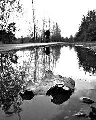 Rainwater reflection (Vorona Photography) Tags: park autumn trees light urban usa macro nature public water colors pool leaves closeup america season outside outdoors photo washington shadows close angle state pacific northwest image path space united scenic picture photograph tacoma states pathway wapato