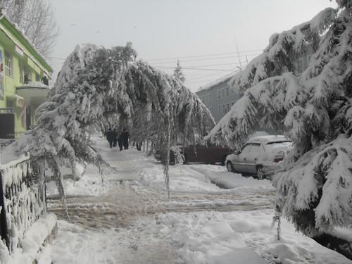 Последствия снегопада в Курган-тюбе (10)