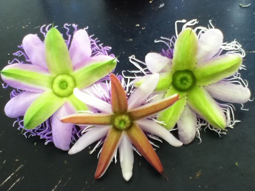some of my passiflora - Page 2 6212066675_a9f038b0bc