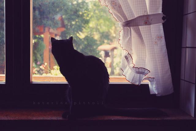 windowsill cat