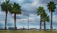 Evening Stroll (Jac Jon) Tags: palmtrees geelong youyangs easternbeach coriobay