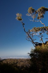Gold Coast (lights+shades) Tags: city mountain tree nationalpark australia lookout queensland goldcoast springbrooknationalpark