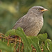 As close as you can get of  this gregarious bird!