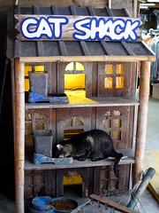 Cat house at the Crab Shack