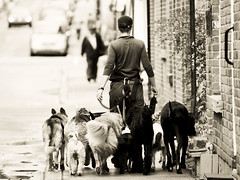 Let the dogs out! (MomoFotografi) Tags: street bw dogs girl sepia photography photo funny zoom femme streetphotography promenade rue fr fille 50200mm zuiko chiens thelittledoglaughed olympuse5 highqualitydogs ldlnoir