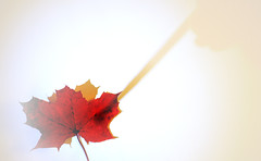 The Autumnal Paintbrush (2)