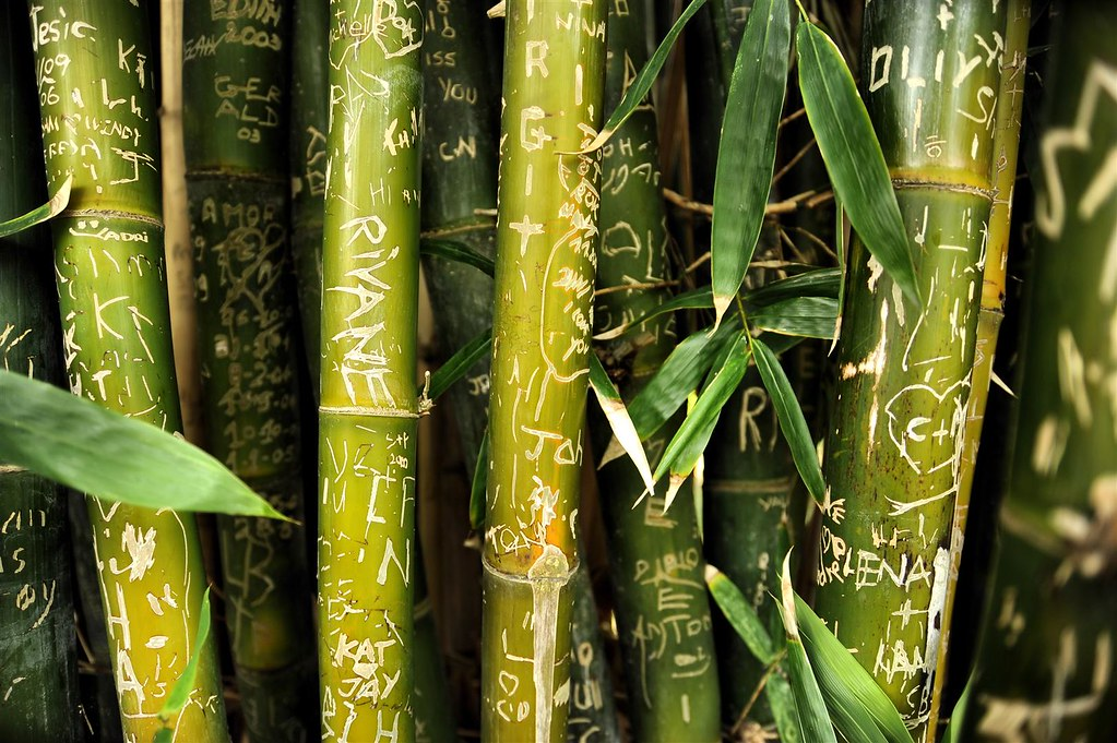 Bamboo - with adornment