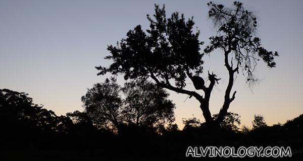 A nice tree silhouette