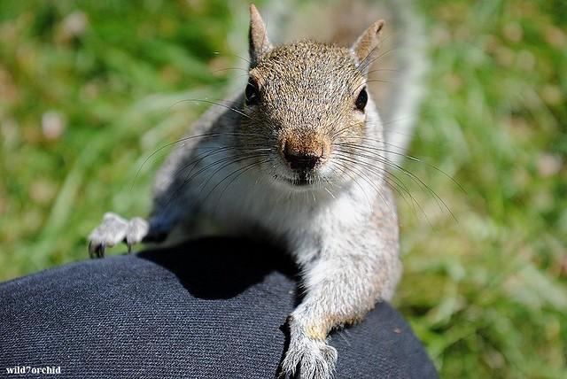 Squirrel - 15