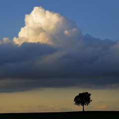 autumn light 2 (pierre hanquin) Tags: autumn light sunset cloud storm color colour fall nature colors clouds automne landscape geotagged soleil nikon europa europe day colours belgium belgique couleurs champs belgi arbres paysage landschaft arbre couleur wallonie 1685 hannut d7000 1685mmf3556gvr dragondaggeraward regionwide magicunicornverybest magicunicornmasterpiece mygearandme mygearandmepremium mygearandmebronze hanquin masterclasselite