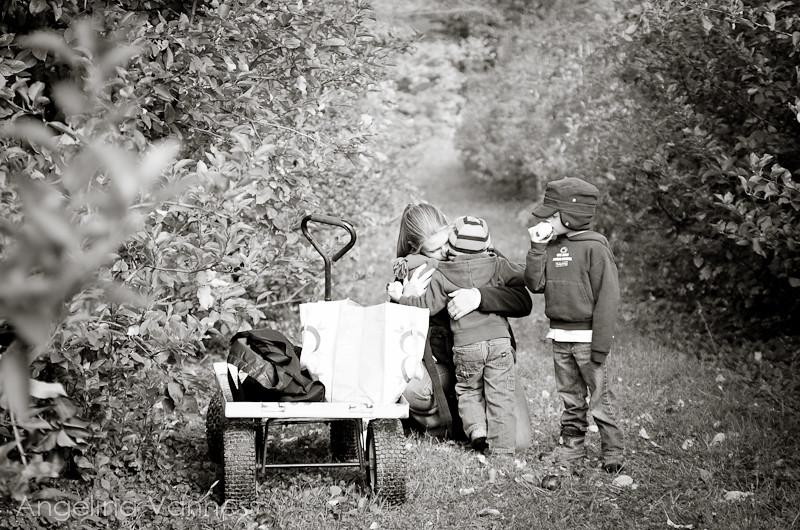 Apple Picking3