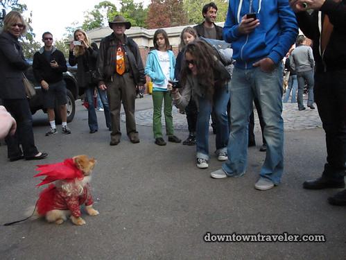Tompkins Park Halloween Dog Parade_Pomeranian as Lady Gaga