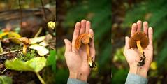 ????Peppery Bolete???? (Markingitall) Tags: food canada mushroom vancouver bc pacific northwest pentax bokeh columbia cap fungus meal burnaby species coquitlam british 28 edible database identify picking poisonous forage hallucinogenic spores k7