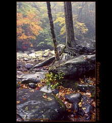 Streamside after the storm (tim, TimCooperPhotos.com) Tags: trees orange water river landscape us nationalpark rocks flickr tennessee fallfoliage northamerica timcooper smokymtnnp