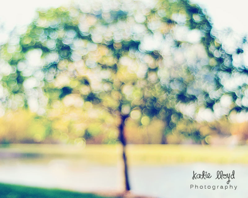 Tree-in-bokeh-8x10-or-16x20