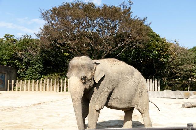 千葉動物公園