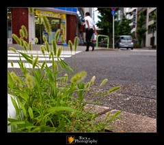 Spontaneous Vegetation IV (Focx Photography) Tags: city plants japan olympus nagoya urbanecology 17mm epl1 spontaneousvegetation