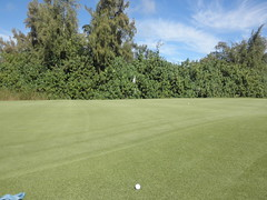Turtle Bay Colf Course 307