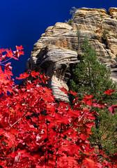 "Fall in Oak Creek Canyon (""Master of Images"") Tags: arizona southwest fall sedona oakcreekcanyon westfork 2011 fall2011 fallcolorsoctober"