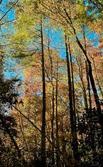 20111016-_DSC3193_web_publ.jpg (StanD70) Tags: autumn fall 35mm nc nikon fallcolor unitedstates foliage nikkor blueridgemountains linvillefalls lr3 linvilleriver d7000 f18g 35mmf18g adobelightroom3 appleaperture3