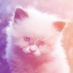Kitten (Larah McElroy) Tags: pictures cats cat photography kitten feline picture kitty kittens kitties felines mcelroy larah larahs larah88 larahmcelroy larahsphotography