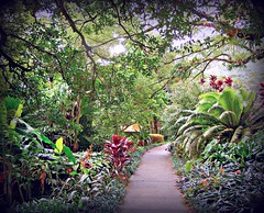 ~~LYON ARBORETUM #2~~ (TravelsThruTheUniverse) Tags: tropical tropicalplants exoticgardens zengardens oahuhawaii tropicalgardens tropicalfoliage flowersfoliage subtropicalgardens tropicallandscapes subtropicallandscapes tropicalgardenslandscaping tropicalflowersfoliage