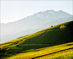 Another side of Switzerland - (vineyards..:)) (Katarina 2353) Tags: travel autumn trees light sunset vacation mist mountain snow alps tree green fall film nature fog landscape photography switzerland nikon europa europe shadows image swiss paisaje hills vineyards valley fields paysage priroda sion bourg tjkp pejza vertorama katarinastefanovic katarina2353 gettylicense  anothersideofswitzerland
