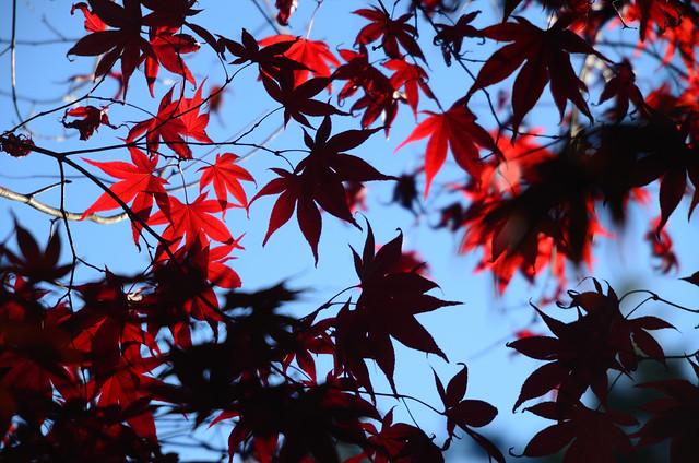 2011.10.29 台中 / 福壽山農場