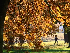 Autumnal jogging (:Linda:) Tags: people man tree germany town running jena thuringia chestnuttree lonesome kastanie kastanienbaum menscheninjena