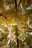 forest dome (demeroli) Tags: autumn colour green fall forest canon eos golden leaf europe 7d highrise largest naturesfinest flowerscolors eos7 mywinners anawesomeshot colorphotoaward flickraward diamondclassphotographer flickrdiamond flickrelitegroup eos7d mygearandme 4tografie allnaturesparadise