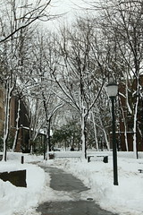 University of Pennsylvania blizzard 2011 (David OMalley) Tags: old city winter snow storm cold ice philadelphia university chinatown pennsylvania snowy snowstorm january freezing pa snowing philly icy blizzard phl oldcity olde phila wintry 2011