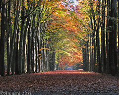 Beukenlaan ( Annieta  Off / On) Tags: wood november nature netherlands canon utrecht nederland natuur powershot lane s2is bos soe allrightsreserved laan lagevuursche 2011 cherryontop supershot annieta bej natureplus abigfave beukenlaan citrit beechlane usingthisphotowithoutpermissionisillegal mygearandme mygearandmepremium mygearandmebronze mygearandmesilver mygearandmegold mygearandmeplatinum mygearandmediamond