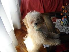 Sansn (Cmo educar a un cachorro) Tags: cachorro