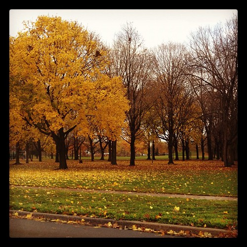 Not Letting Go #fall #trees #yellow