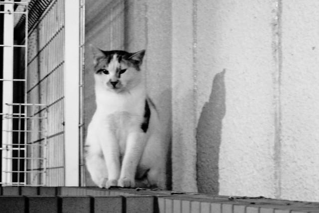 Today's Cat@2011-11-10